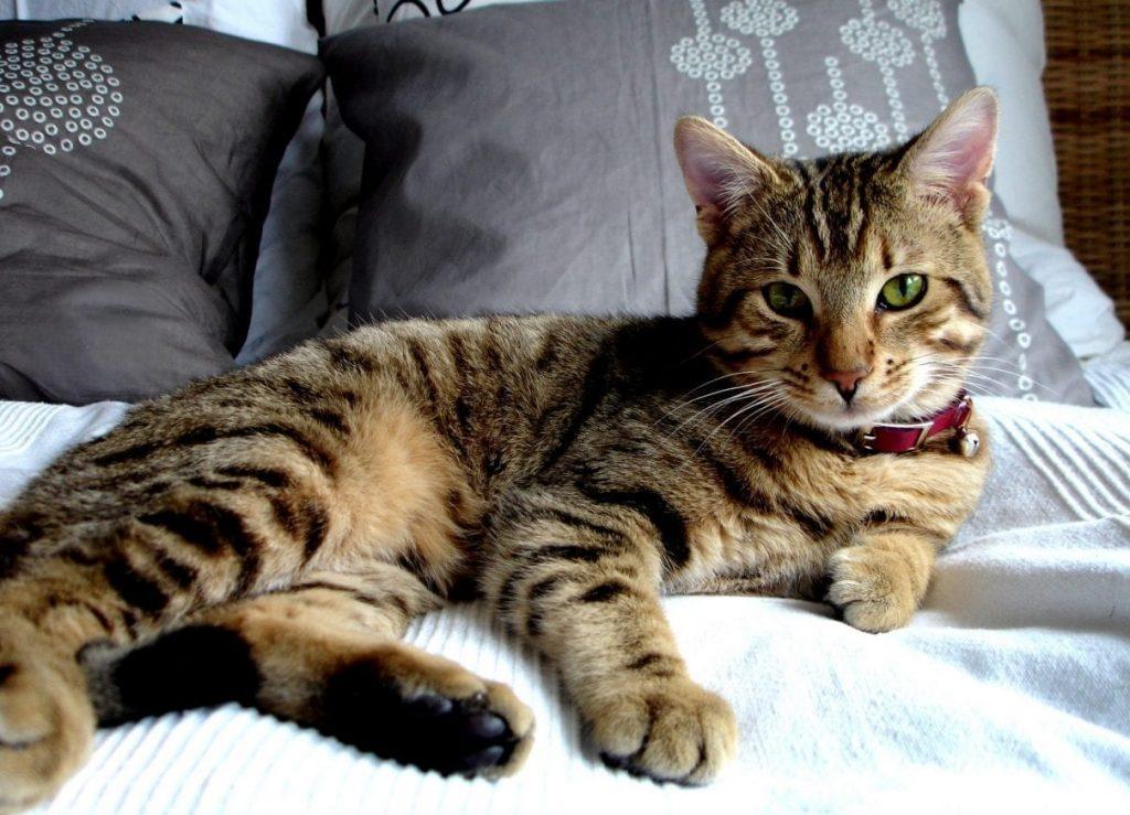 cat 1393633