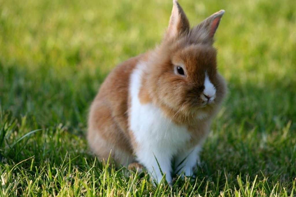 rabbit in farm 1563129 1599x1066 1