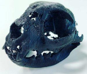 3D Ausdruck CT Katzenschädel